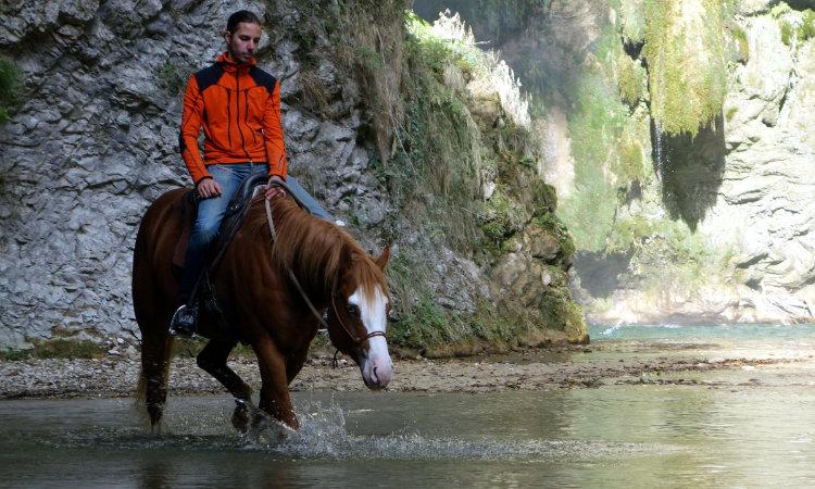 MND Horses stallion
