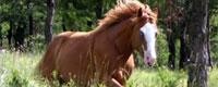 chevauxavendre