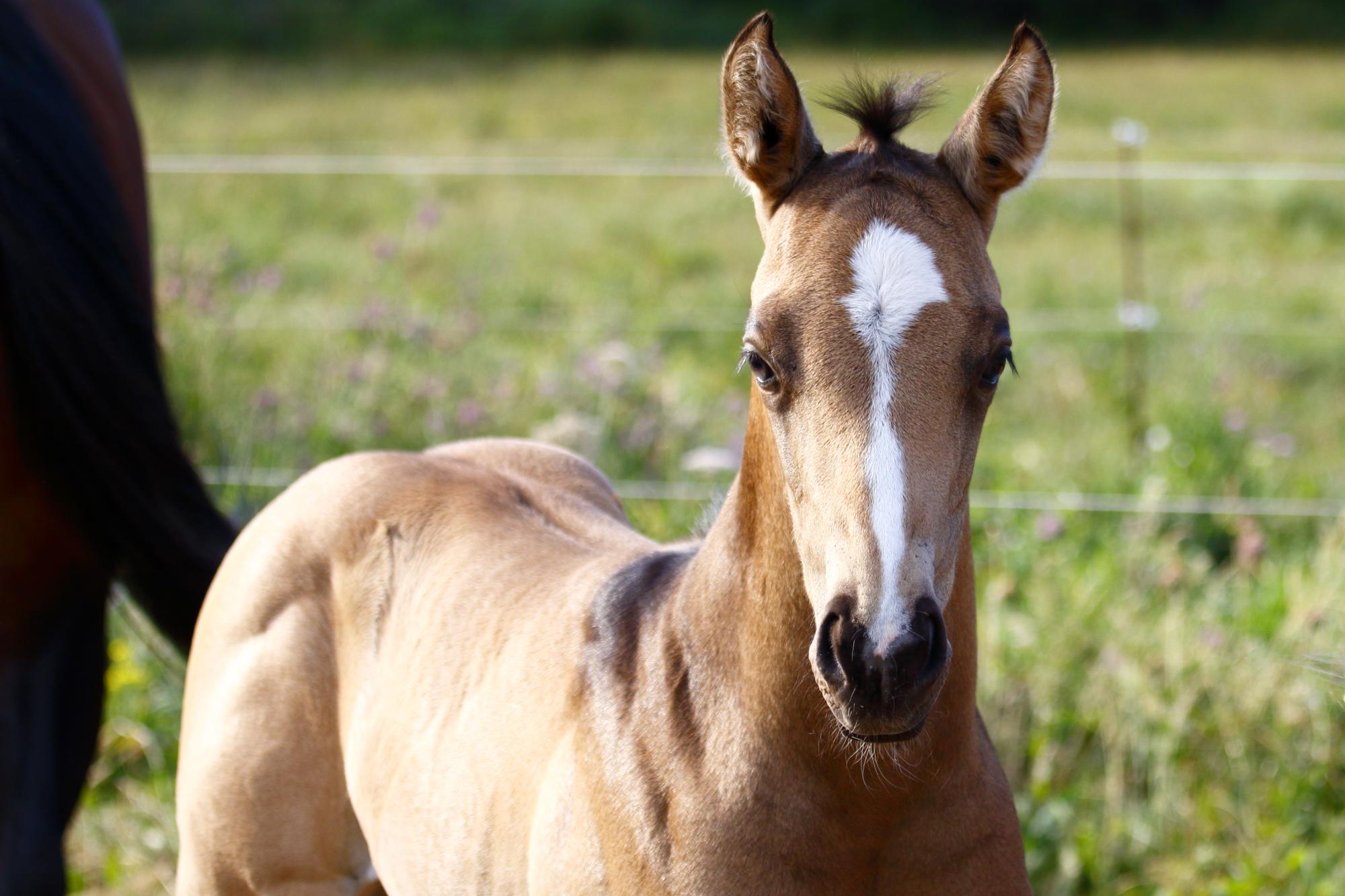 poulain MND Horses