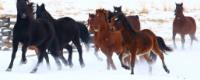 randonne-cheval-canada